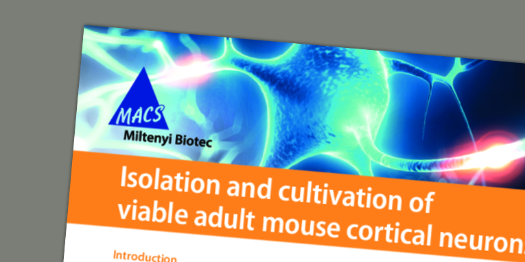 Isolation and cultivation of viable adult mouse cortical neurons