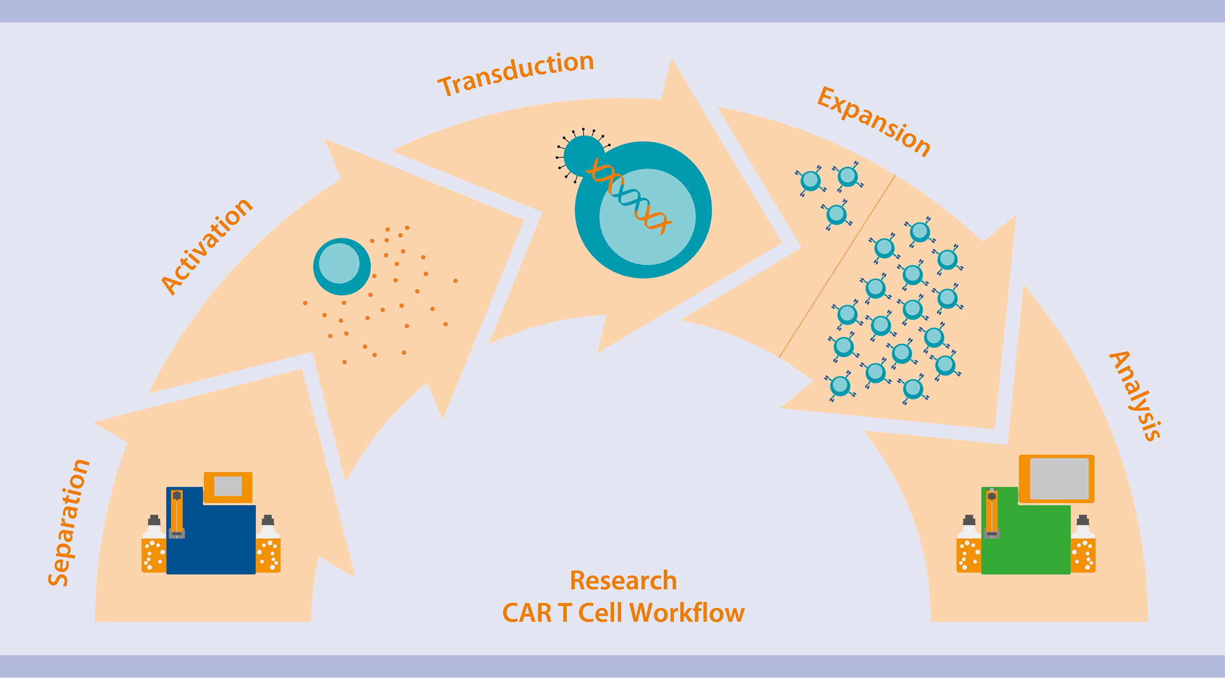 Engineered T cells for research - T cells - Applications