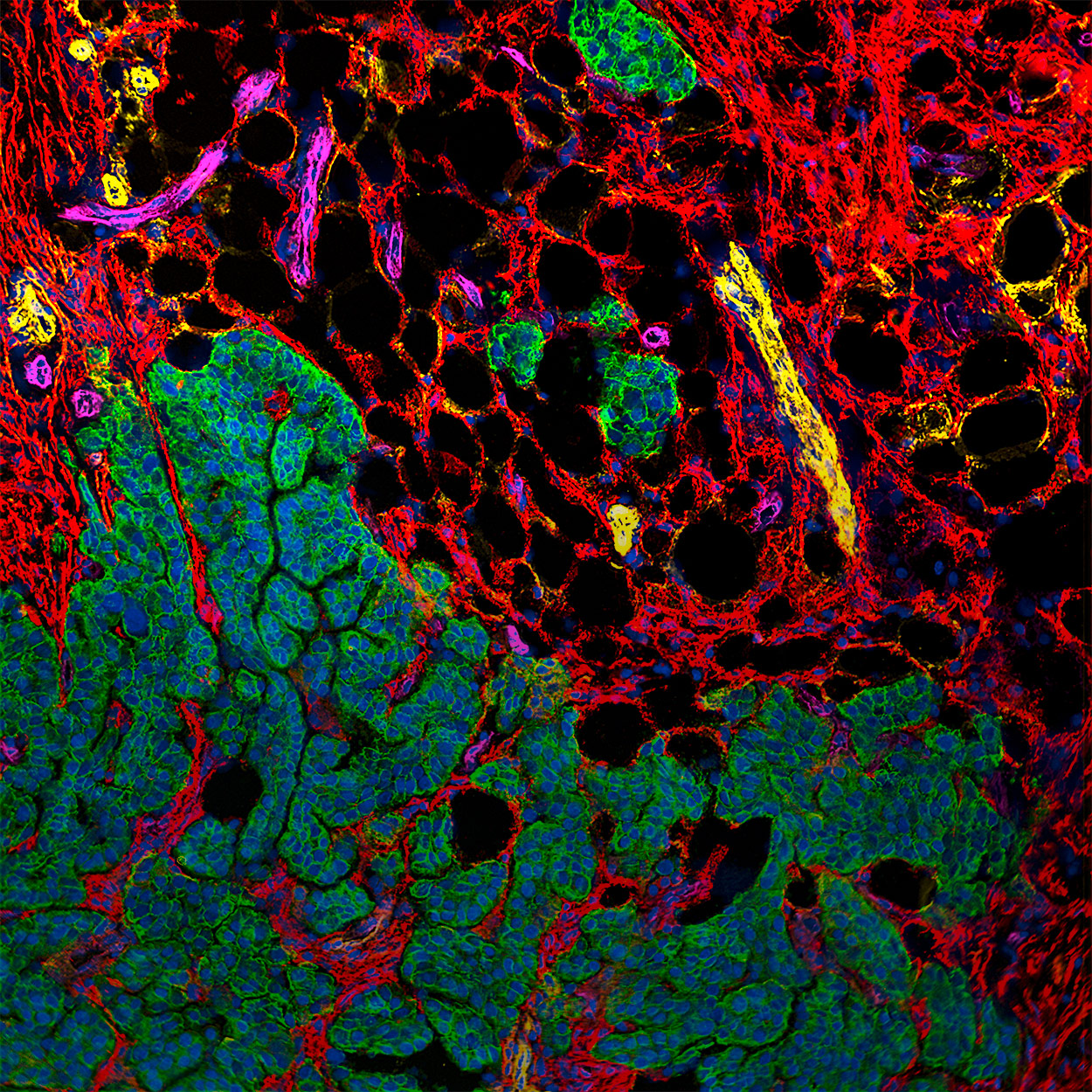 Antibodies for microscopy and imaging