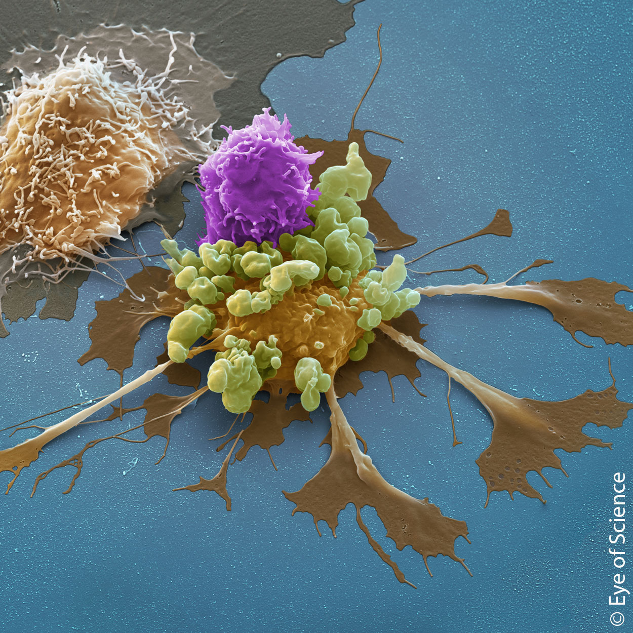 Our latest solutions to improve your CAR T cell research