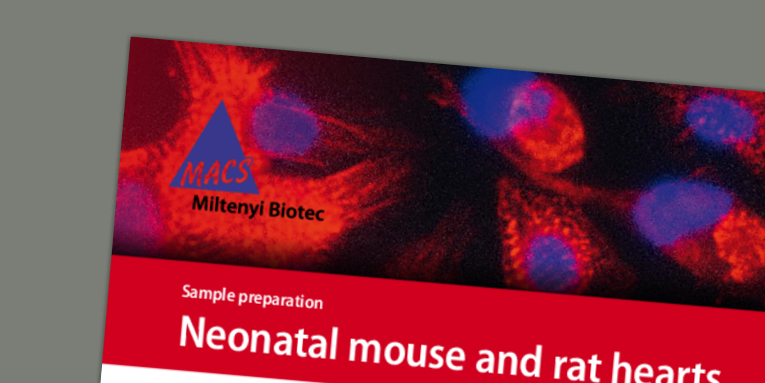 Dissociation of neonatal mouse hearts to isolate neonatal cardiomyocytes