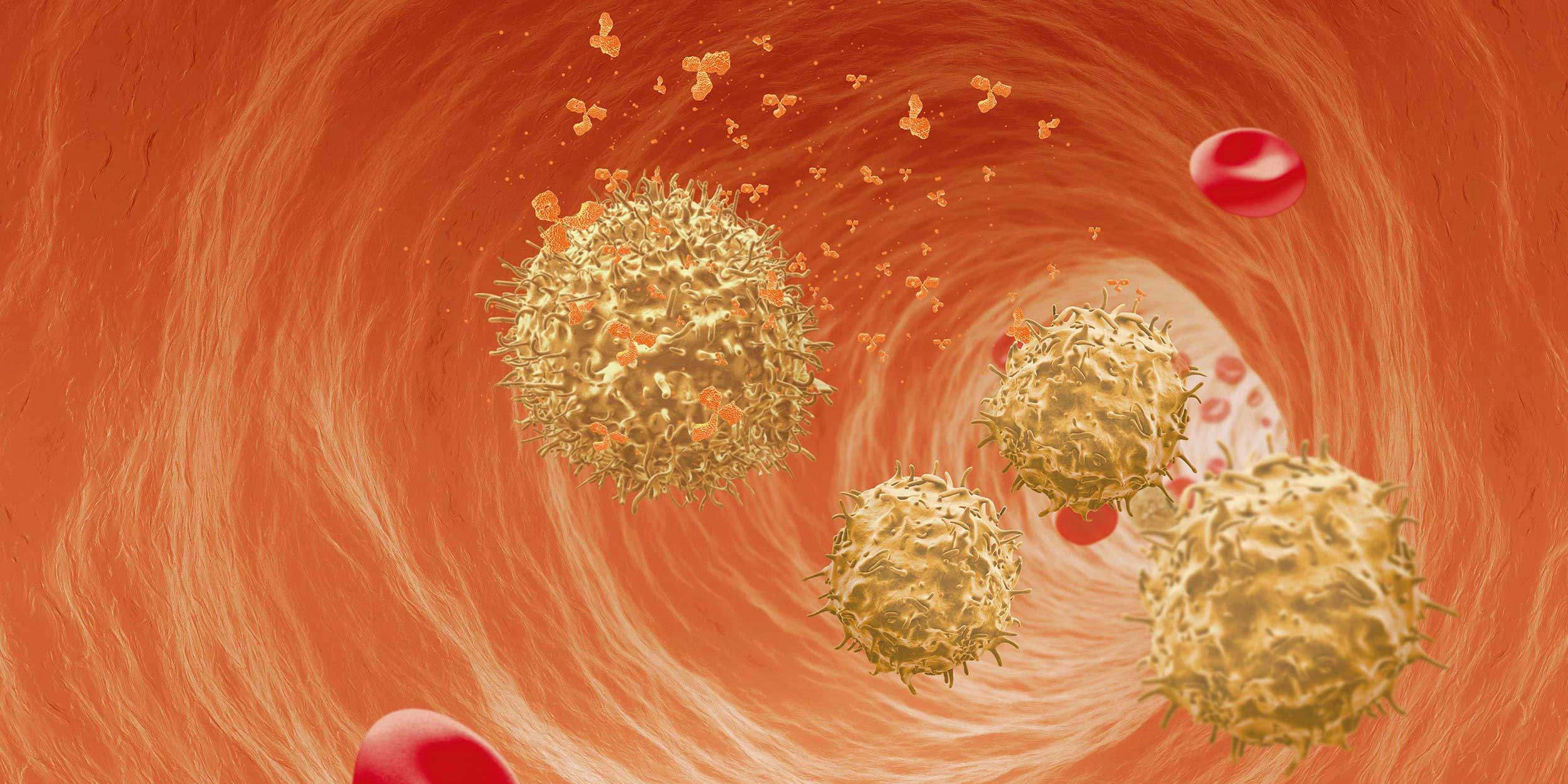 All you need for immuno-oncology B cell research