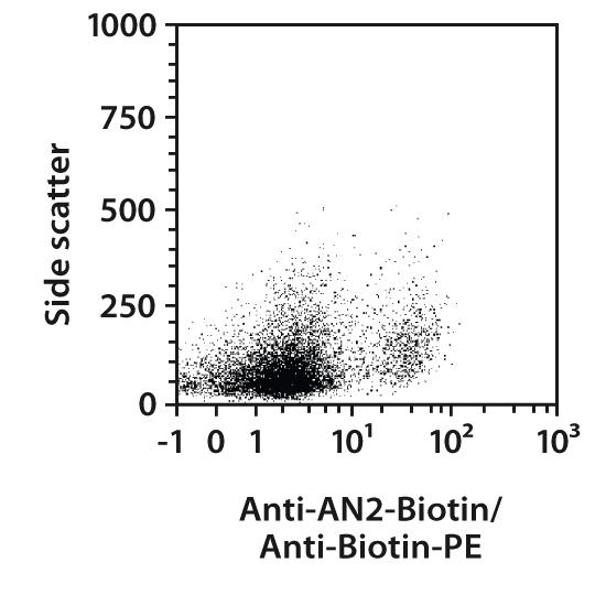 AN2 Antibody, anti-human/mouse