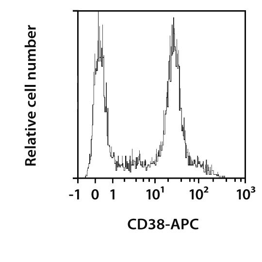 CD38 Antibody, anti-mouse