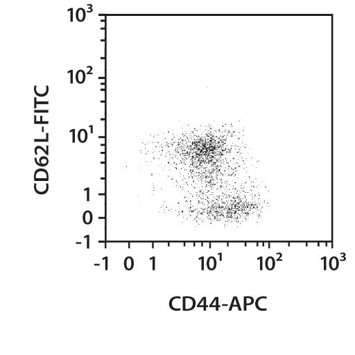 CD44 Antibody, anti-mouse