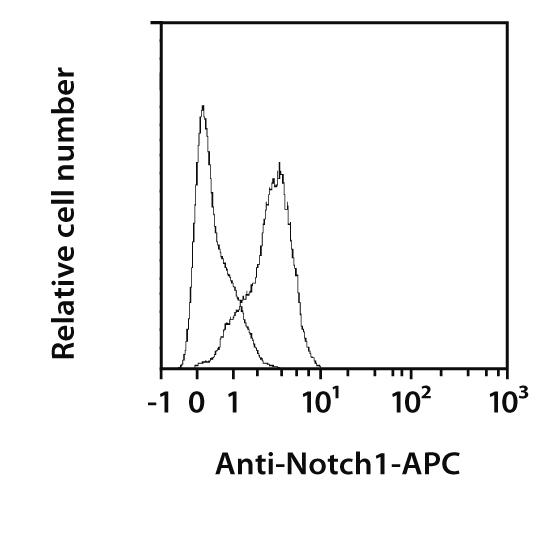 Notch1 Antibody, anti-mouse