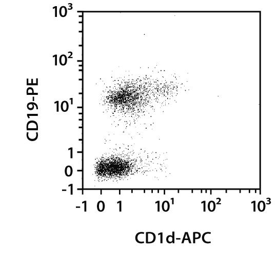 CD1d Antibody, anti-mouse