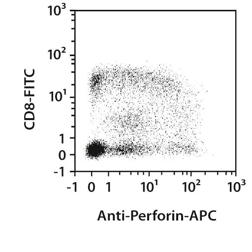 Perforin Antibody, anti-human