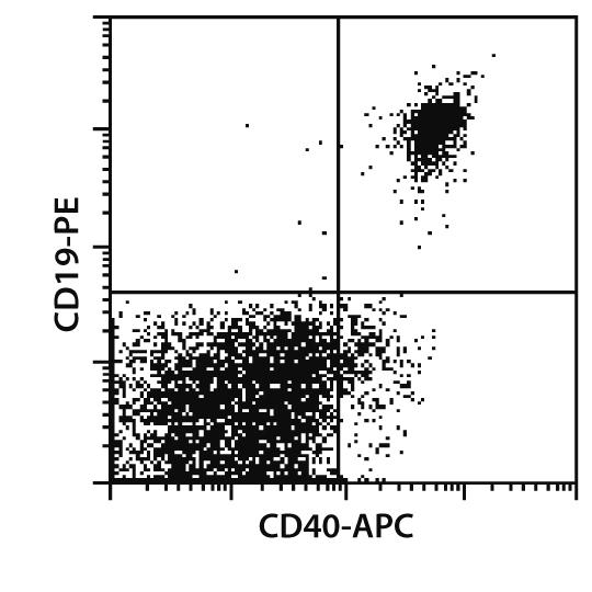 CD40 Antibody, anti-human