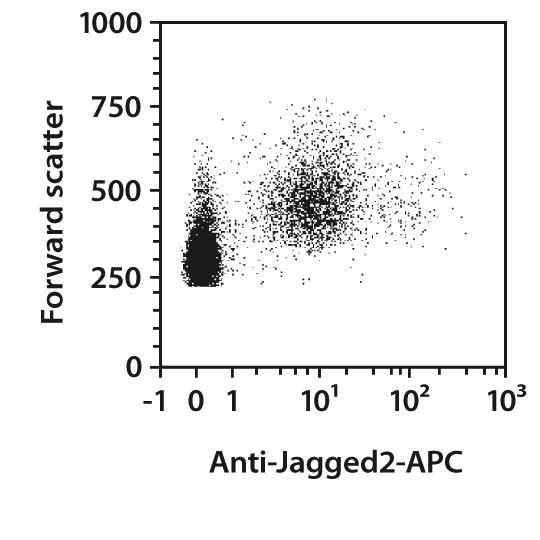 Jagged2 Antibody, anti-mouse