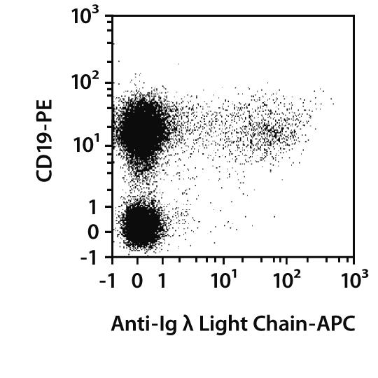 Ig λ Light Chain Antibody, anti-mouse