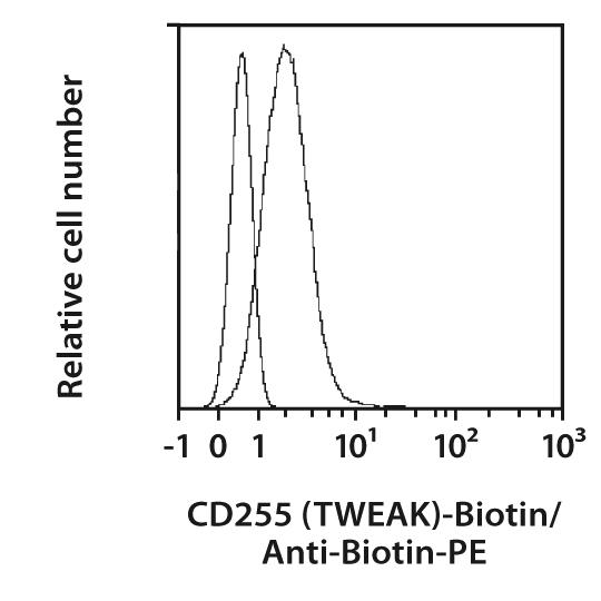 CD255 (TWEAK) Antibody, anti-human
