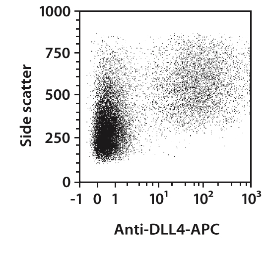 DLL4 Antibody, anti-mouse