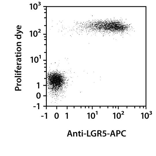 LGR5 Antibody, anti-human