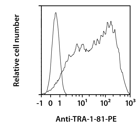 TRA-1-81 Antibody, anti-human, REAfinity™