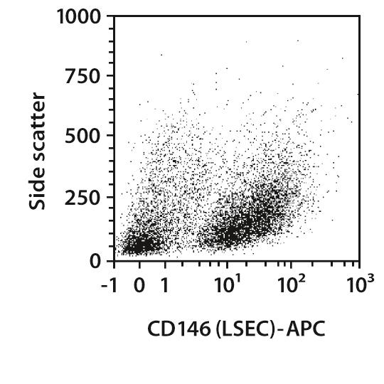 CD146 (LSEC) Antibody, anti-mouse