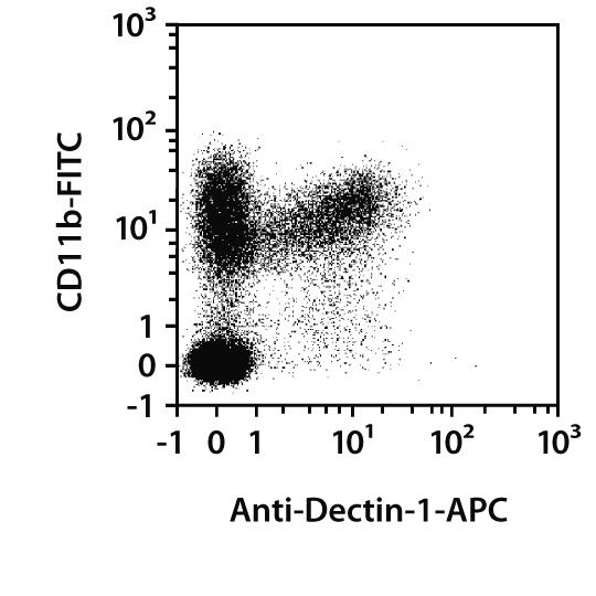 Dectin-1 Antibody, anti-mouse, REAfinity™