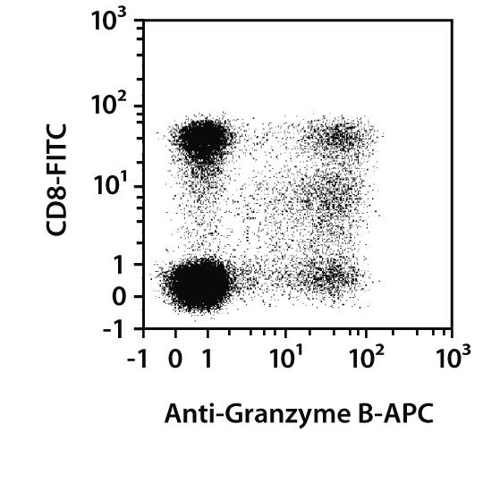 Granzyme B Antibody, anti-human/mouse/rat, REAfinity™