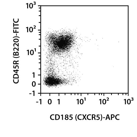 CD185 (CXCR5) Antibody, anti-mouse, REAfinity™