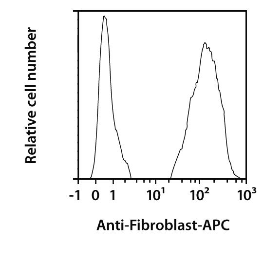 Fibroblast Antibody, anti-human, REAfinity™