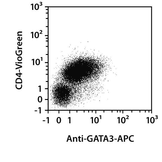 GATA3 Antibody, anti-human/mouse, REAfinity™