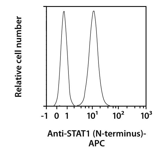 STAT1 N-terminus Antibody, anti-human, REAfinity™