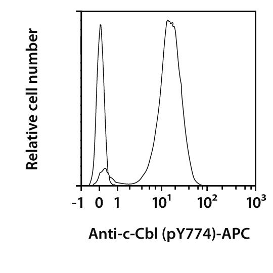 c-Cbl pY774 Antibody, anti-human, REAfinity™