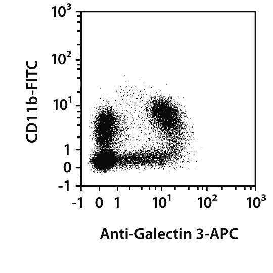 Galectin-3 Antibody, anti-human/mouse