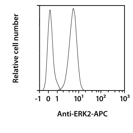 ERK2 Antibody, anti-human/mouse, REAfinity™