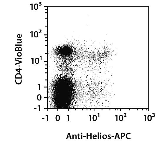 Helios Antibody, anti-human/mouse