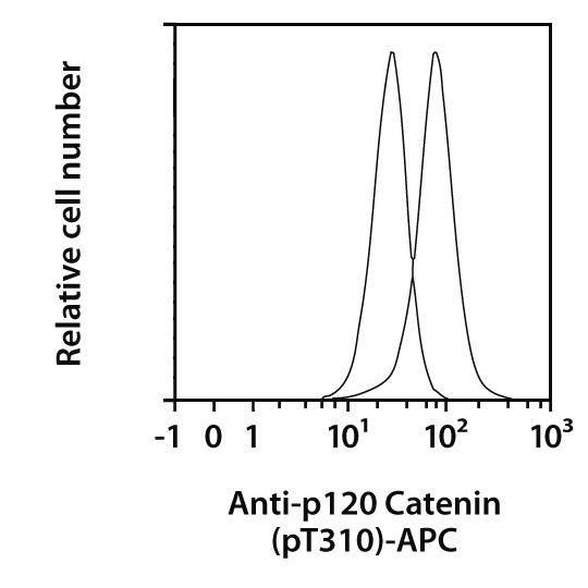 p120 Catenin pT310 Antibody, anti-human, REAfinity™
