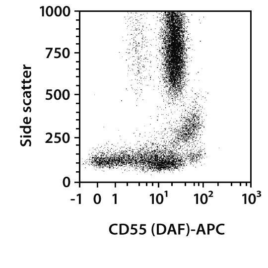 CD55 (DAF) Antibody, anti-human