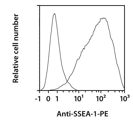 SSEA-1 Antibody, anti-human/mouse, REAfinity™