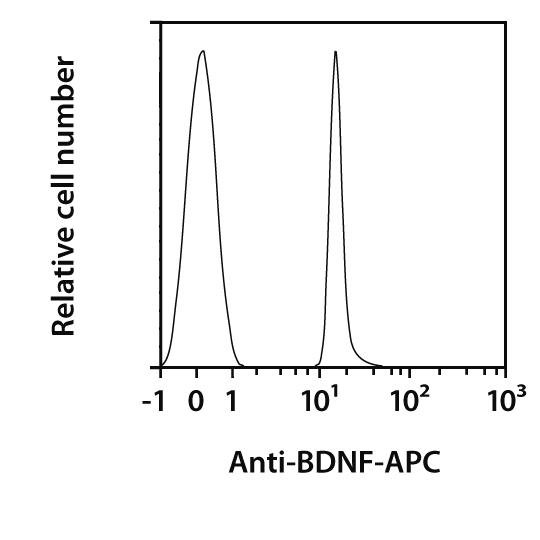 BDNF Antibody, anti-human, REAfinity™