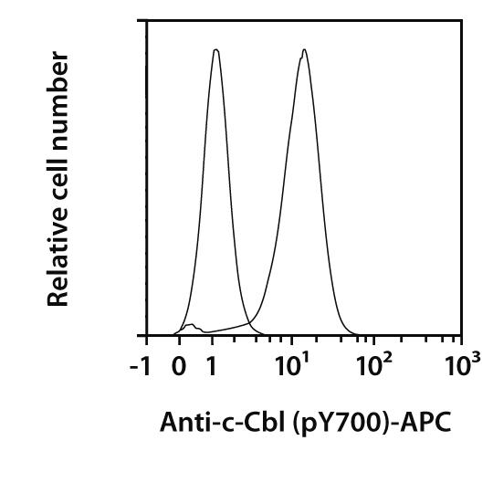 c-Cbl pY700 Antibody, anti-human/mouse, REAfinity™