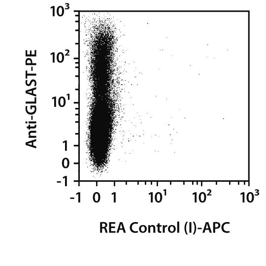 GFAP Antibody, anti-human/mouse/rat, REAfinity™