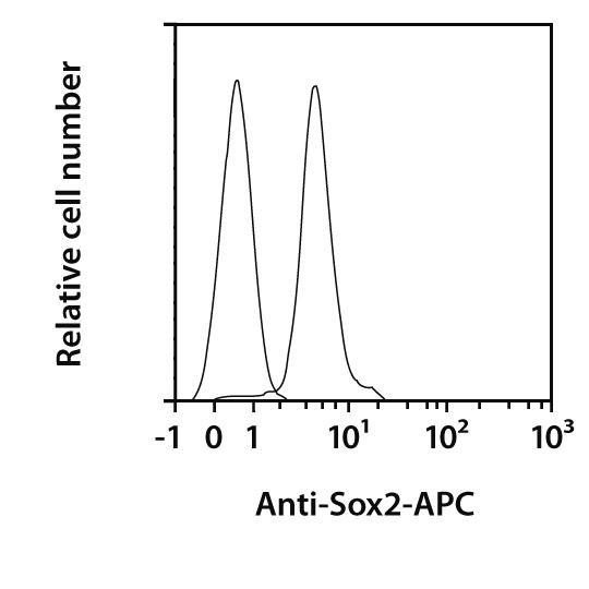 Sox2 Antibody, anti-human/mouse, REAfinity™