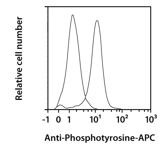 Phosphotyrosine Antibody, anti-human/mouse, REAfinity™