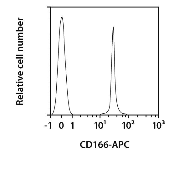 CD166 Antibody, anti-mouse, REAfinity™