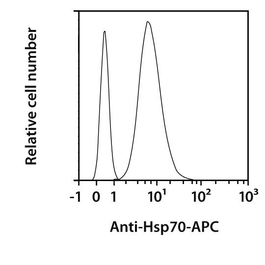 Hsp70 Antibody, anti-human/mouse, REAfinity™