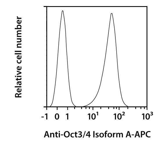 Oct3/4 Isoform A Antibody, anti-human/mouse, REAfinity™