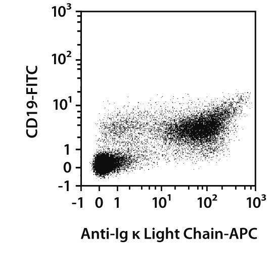 Ig κ Light Chain Antibody, anti-mouse