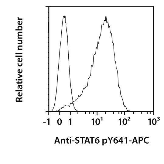STAT6 pY641 Antibody, anti-human, REAfinity™