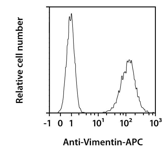 Vimentin Antibody, anti-human, REAfinity™