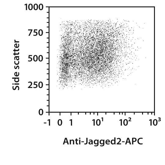 Jagged2 Antibody, anti-human