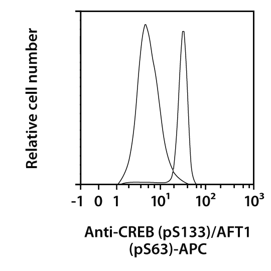 CREB pS133/ATF1 pS63 Antibody, anti-human, REAfinity™