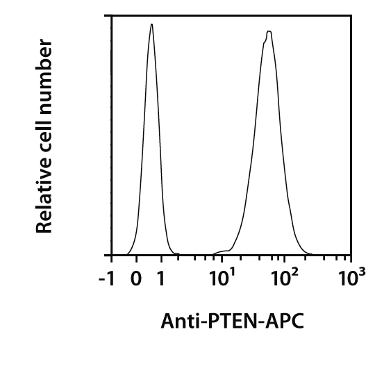 PTEN Antibody, anti-human/mouse, REAfinity™