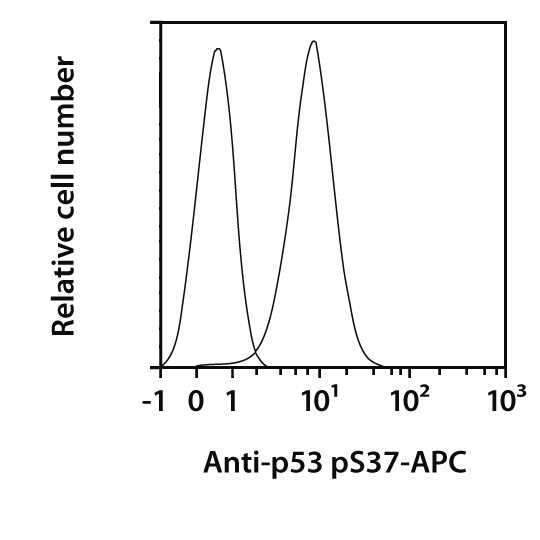 p53 pS37 Antibody, anti-human, REAfinity™