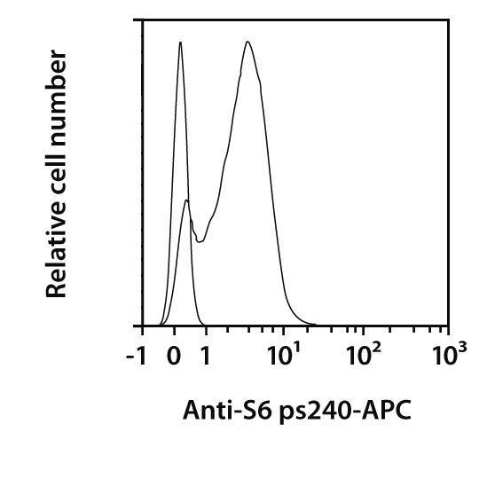 S6 pS240 Antibody, anti-human, REAfinity™