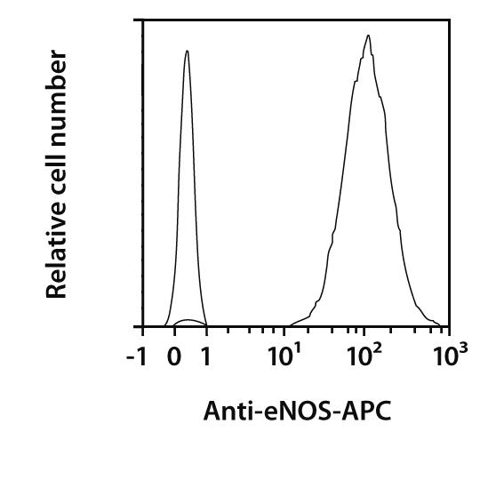 eNOS Antibody, anti-human, REAfinity™